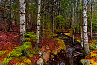 Spring Forest in Acadia National Park, ME